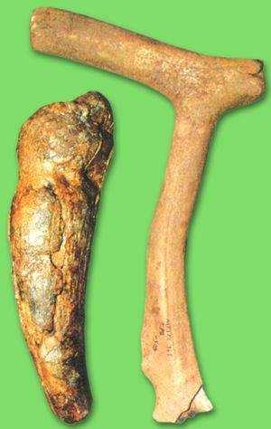 Стукалки з бивнята рогу (Мізин)