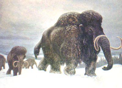 Головний представник мамонтового фауністичного комплексу