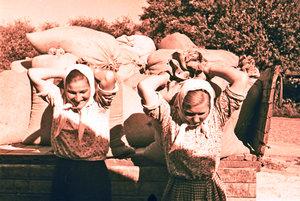 """Колгоспниці  колгоспу ім. В. Леніна розвантажують хліб на пункту """"Заготзерна. Місто Бровари Київської області. 1946 рік."""